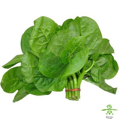 叶菜类 > 蔬果类 > 木耳菜 - 景致田园有机绿色蔬菜图片